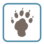 Bear Animal Paw
